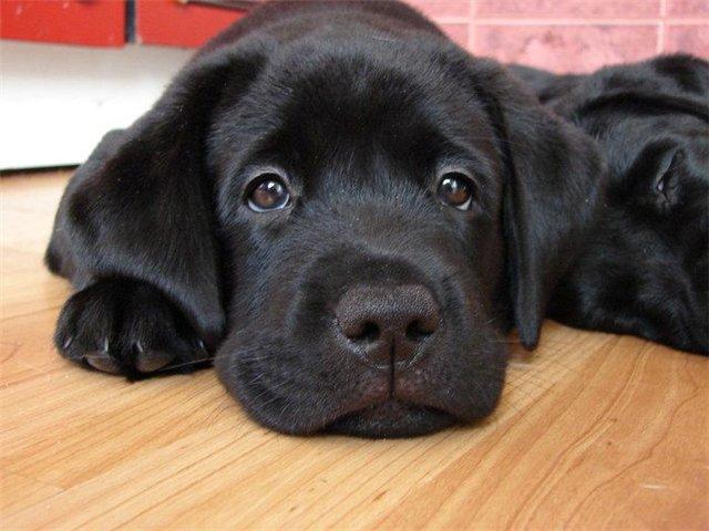 Дисбактериоз у собак и кошек: причины, симптомы, диагностика и профилактика.