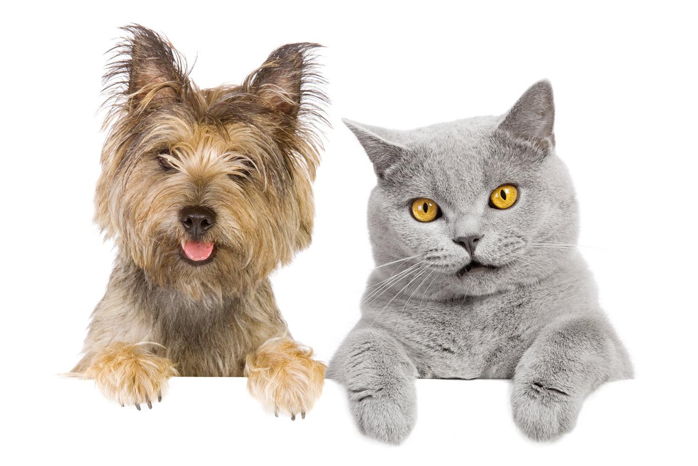 Кастрация – мифы и реальность, советы ветеринара