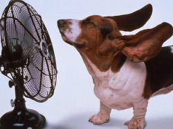 Солнечный / тепловой удар у животных – как распознать и что делать?