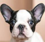 dogs-ears2