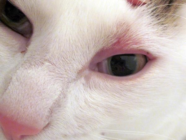 Здоровы ли глаза вашей кошки? Тест в домашних условиях